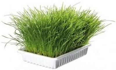 TRIXIE žolė katėms  dėžutėje 100g